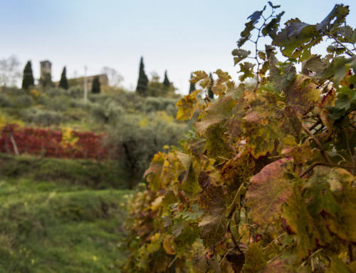 What to do in Cortona in October and surroundings