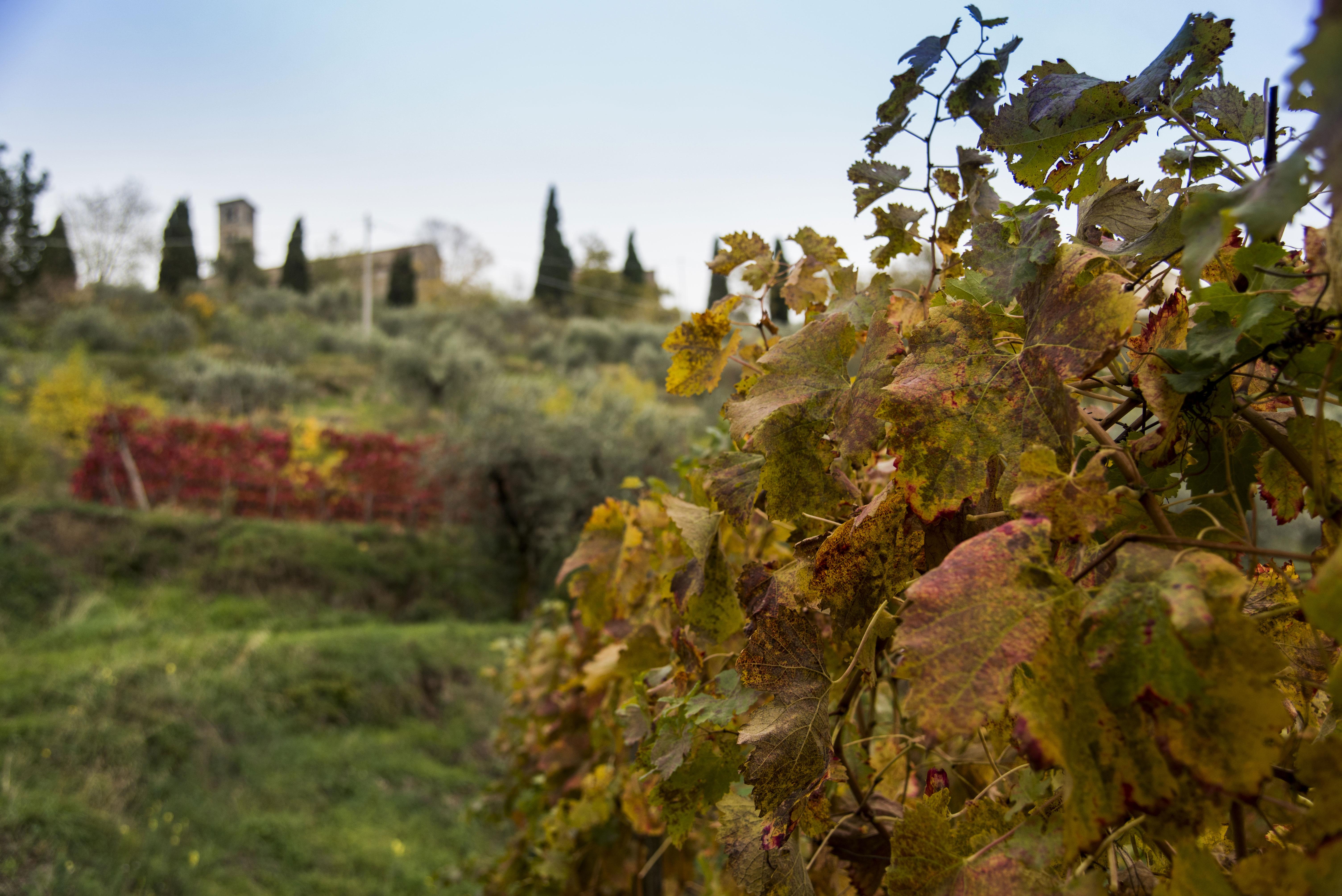 Cortona autumn